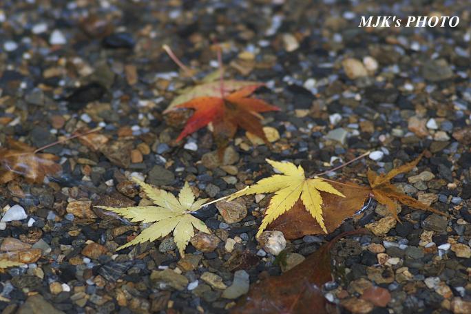 kannamiji6496.jpg