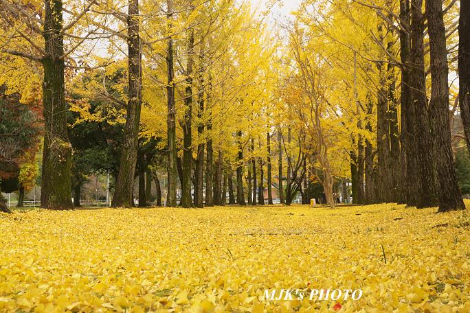 yuuhigaoka6501.jpg