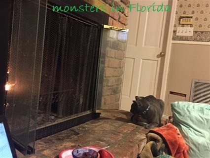 2017-01-28 IMG_6828 (4) (Custom)