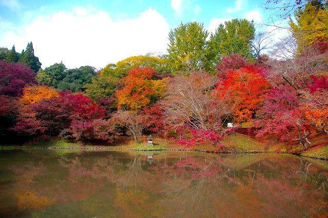 岡藩家老別邸跡 用作(ゆうじゃく)公園 紅葉