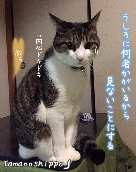 オナラが敵だと思っている猫(ちび)イメージ