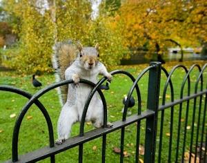 ロンドンの公園のリス