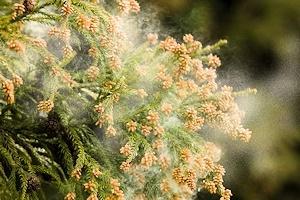 恐怖のスギ花粉
