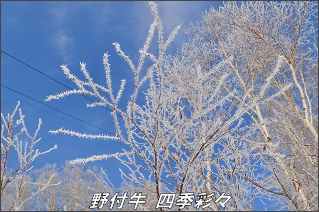 s-TG3-20161221-100653-0.jpg
