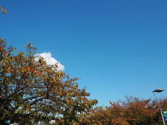 長居公園 桜-紅葉
