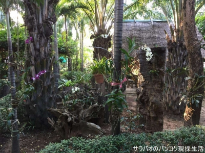 Orchid Hibiscus guest house
