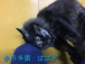 ぱぱ_170208_0004
