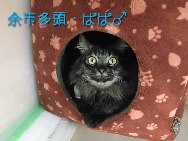 ぱぱ_170208_0001_0