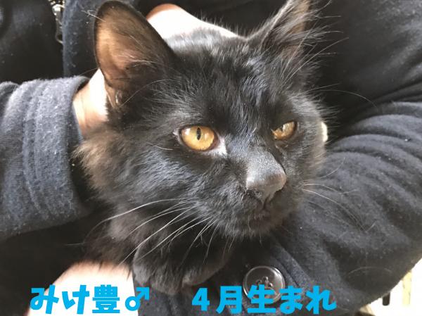 mikeyutaka_convert_20161110214039.jpg