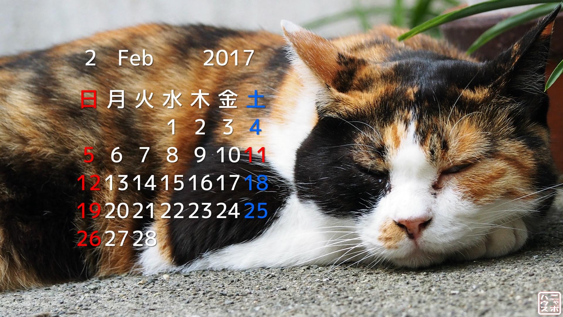 2017年2月 猫デスクトップカレンダー