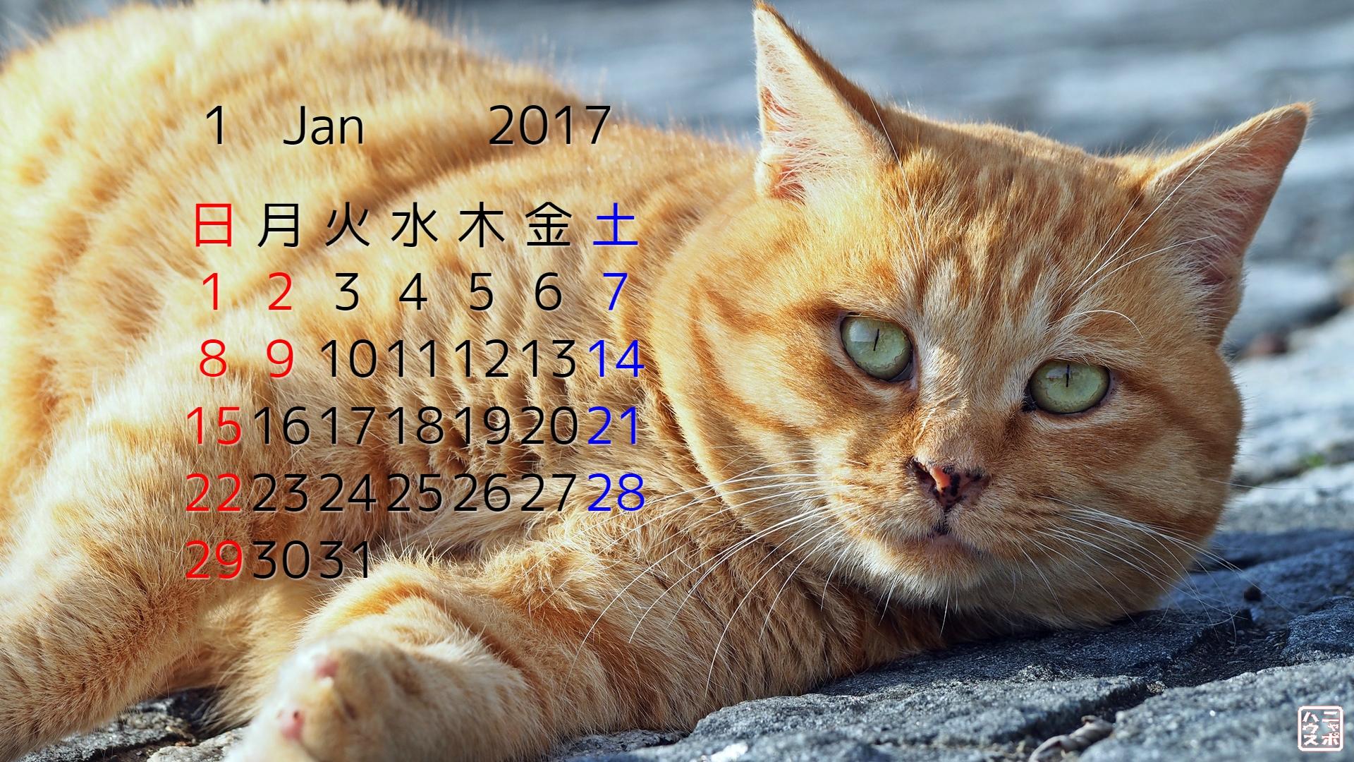 2017年1月 猫デスクトップカレンダー