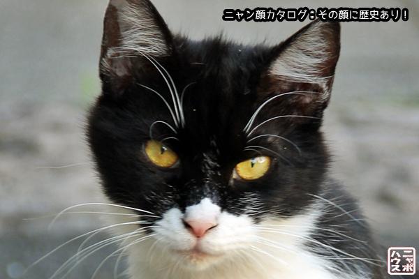 ニャン顔NO61 シロクロ猫さん