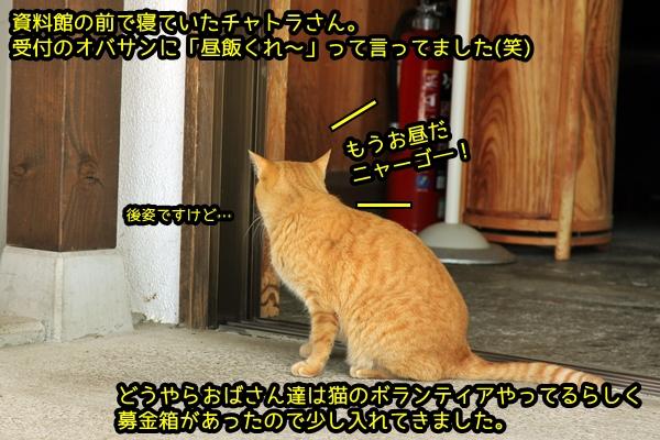 ニャポ旅28 その4 下田猫2