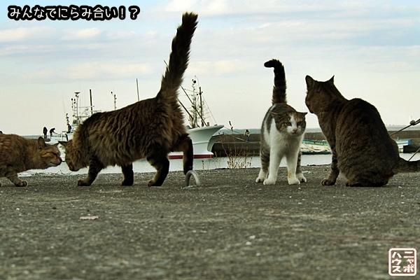 ニャポ旅31 新春の南房総を散策 番外編 猫写真