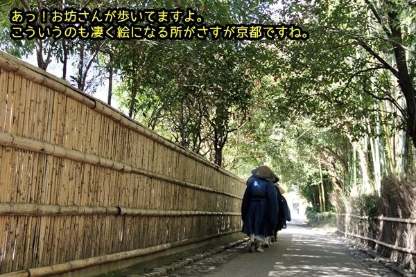 ニャポ旅33 早春の京都散策 嵐山 竹林