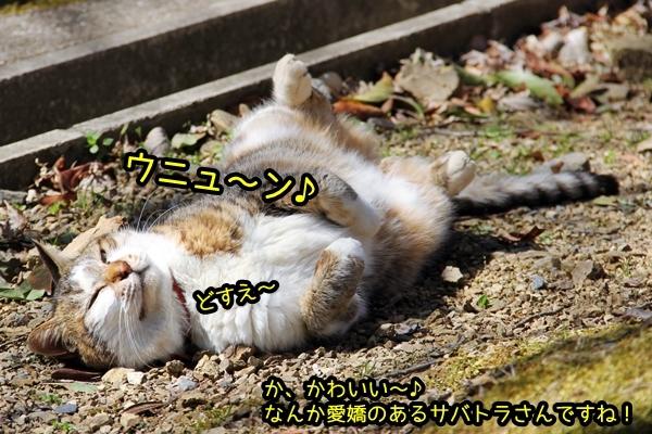 ニャポ旅33 早春の京都散策 猫