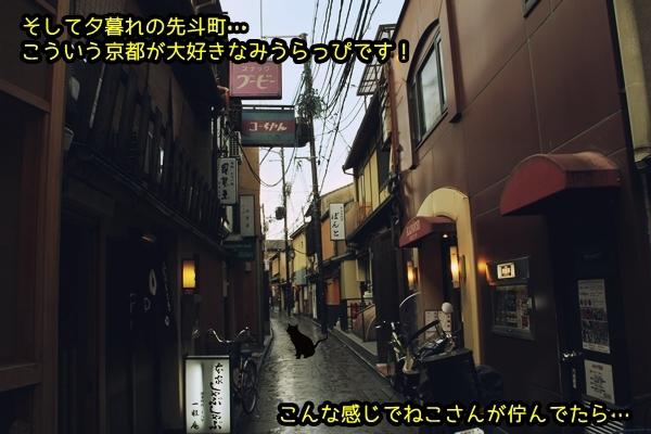 ニャポ旅33 早春の京都散策 先斗町