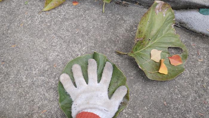 モクレンの葉3