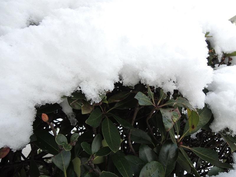 今日の積雪