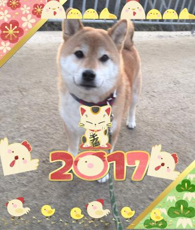 fc2blog_201701020959045d0.jpg