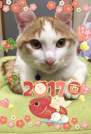 fc2blog_2017010210094580e.jpg