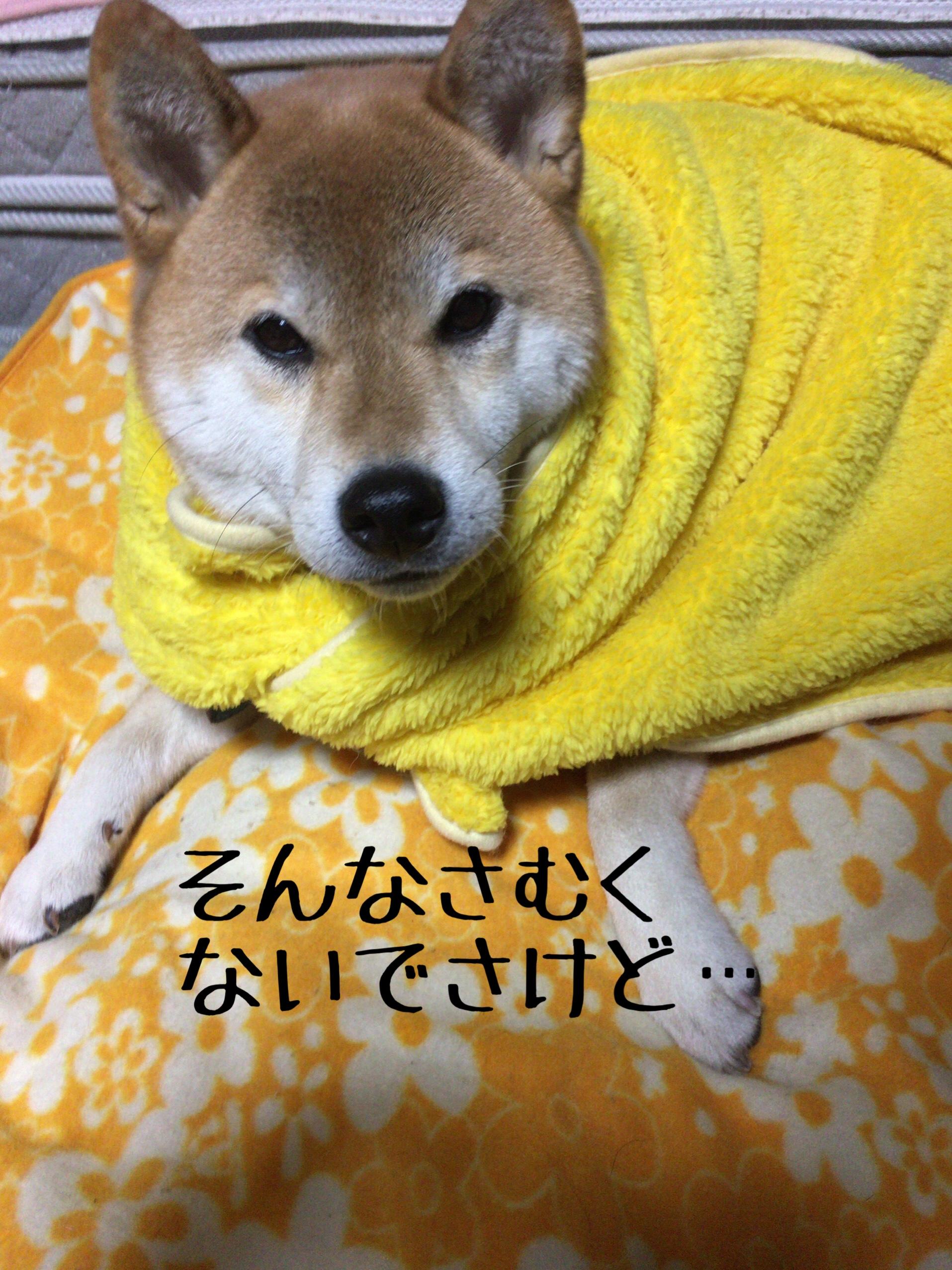 fc2blog_20170116113434af2.jpg