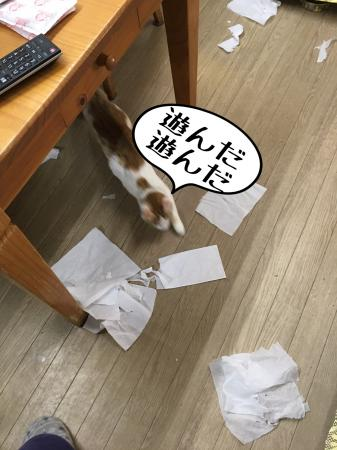 fc2blog_20170123105459844.jpg