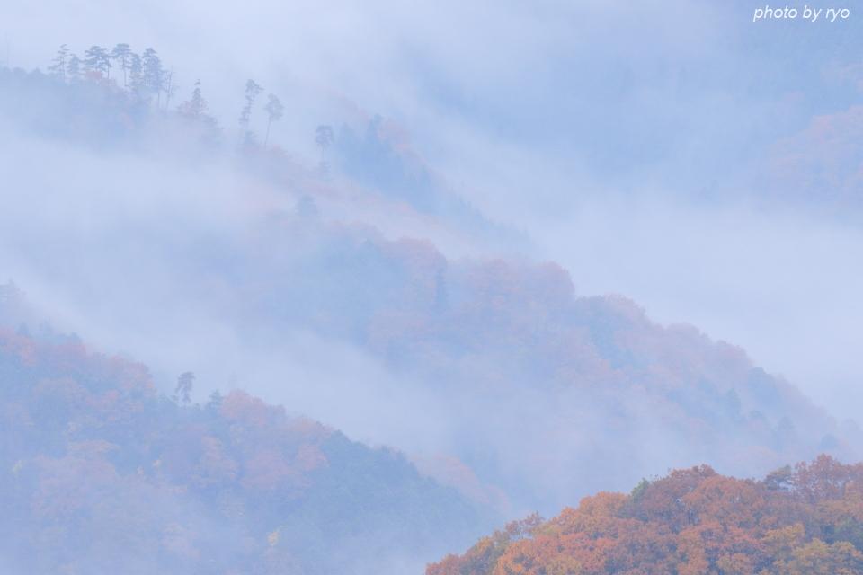 霧と紅葉_1
