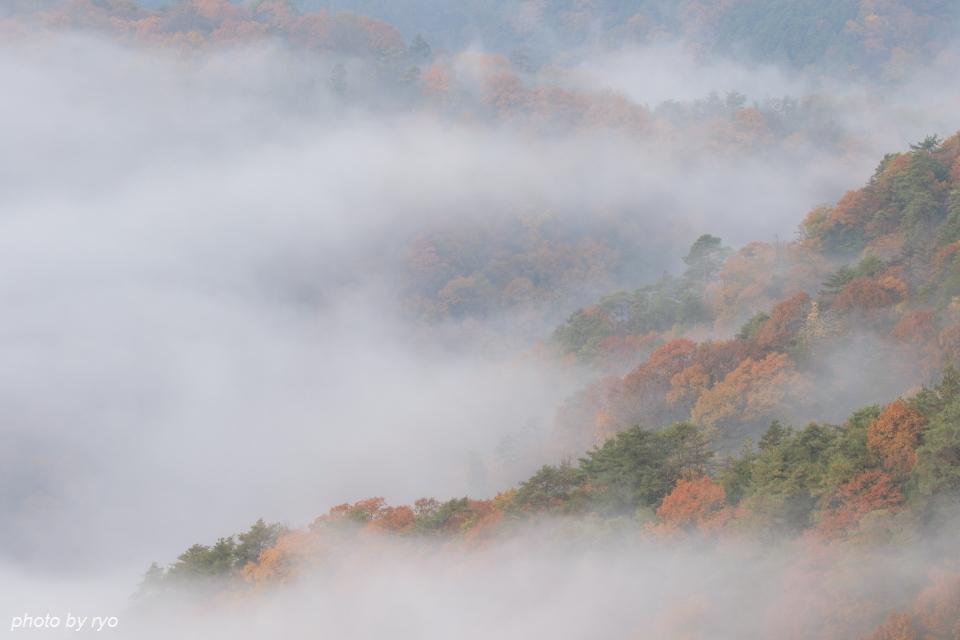 霧と紅葉_2