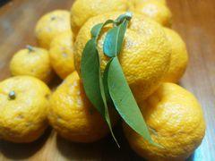 【写真】のぶ子さんからいただいたたくさんの柚子の実