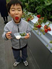 【写真】大粒のいちごを頬張り、幸せそうにおどける男の子