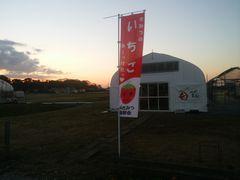 【写真】受付ハウス前に掲げたイチゴのノボリが夕焼け空にたなびく様子