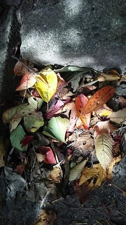 階段の紅葉
