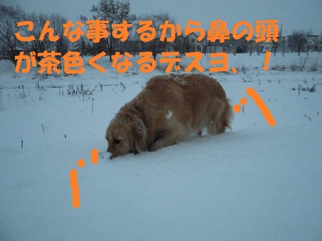 CIMG3842_P.jpg