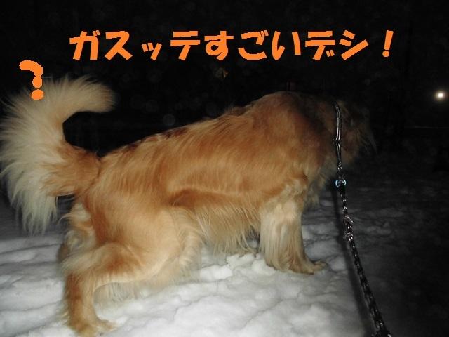 CIMG3849_P.jpg