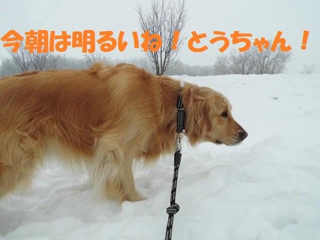 CIMG4193_P.jpg