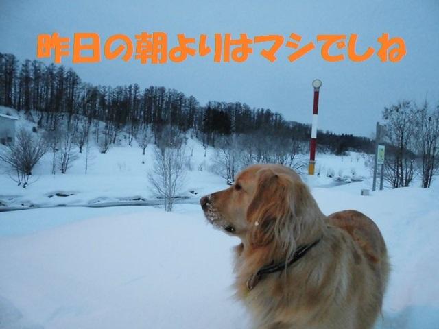 CIMG4224_P.jpg
