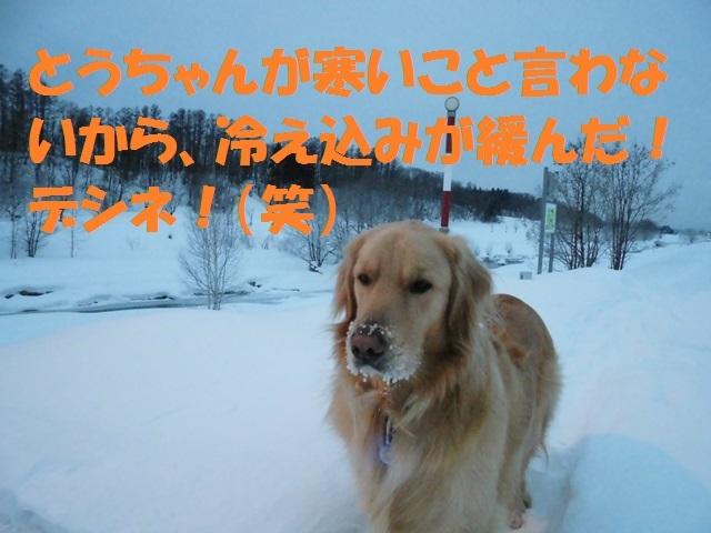CIMG4225_P.jpg