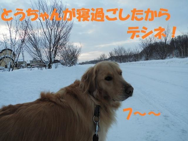 CIMG4236_P.jpg