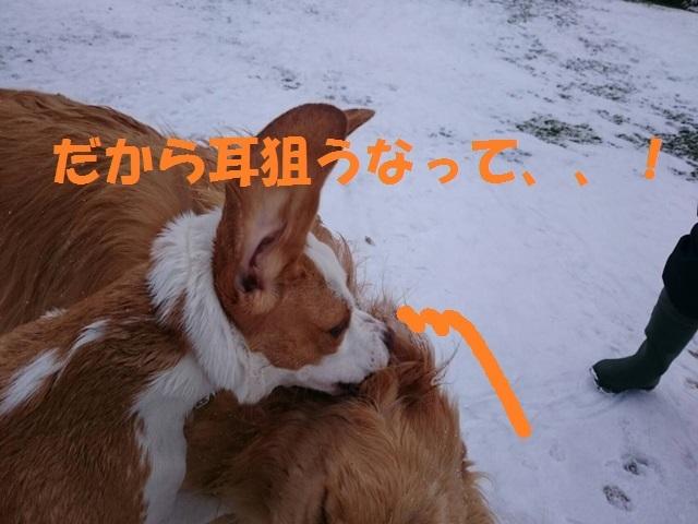 IMG_0343_P.jpg