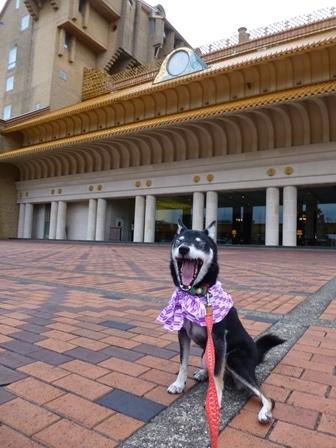ホテル川久朝のお散歩2