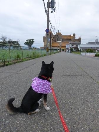ホテル川久朝のお散歩5