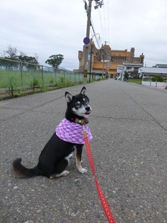 ホテル川久朝のお散歩6