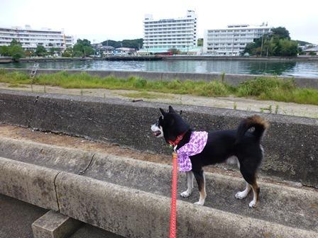 ホテル川久朝のお散歩11
