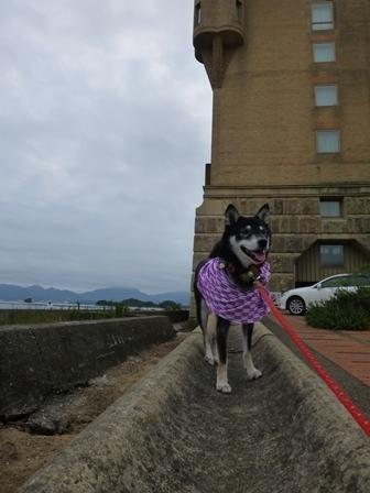 ホテル川久朝のお散歩12