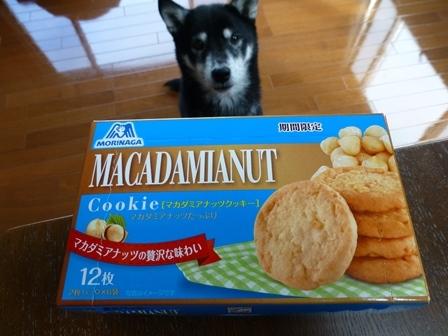 期間限定マカダミアナッツクッキー (2)