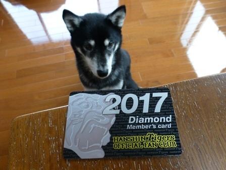 阪神2017年記念品7