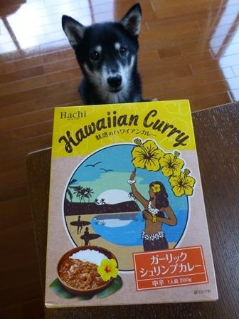 魅惑のハワイアンカレー1