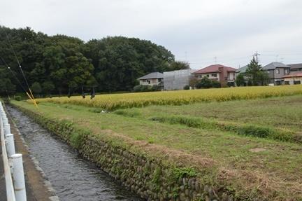 2016-10-10_50.jpg