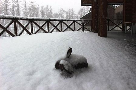 B ユキウサギ